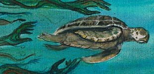 The rig - la tortue, le pélican et la plate-forme pétrolière