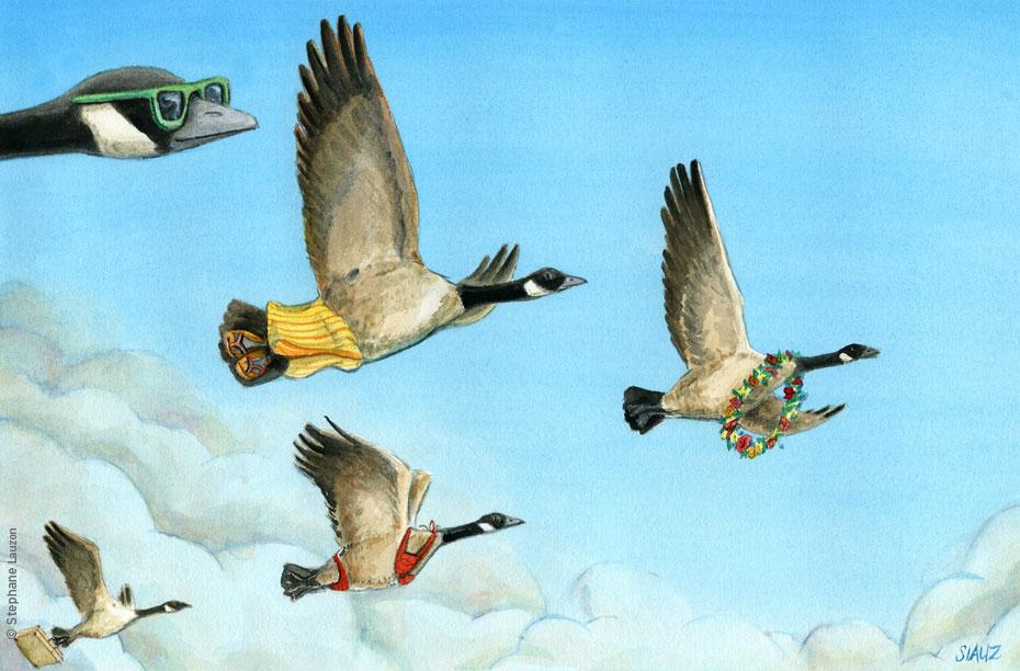 Migration des outardes
